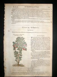 Gerards Herbal 1633 Hand Col Botanical Print. Barberry Bush Fruit